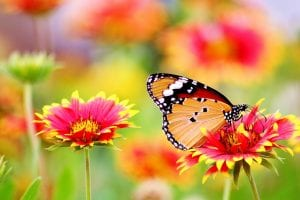 butterfly-garden-gate