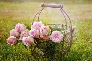 roses-garden-gate-gardening