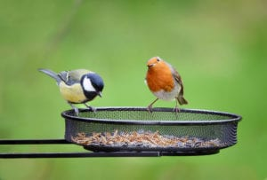 Spring Garden Activities animals