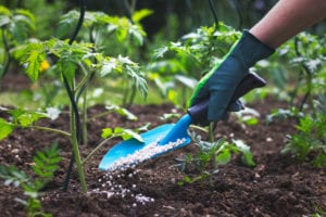 Spring Garden Activities planting your own food