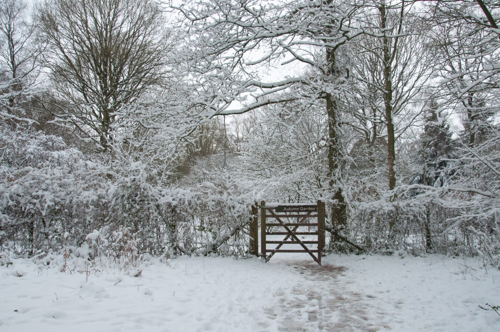Wooden gate covered in snow in the winter
