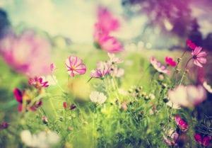 pink flowers in a green meadow